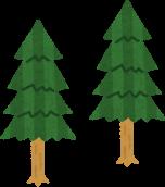 木のイメージ